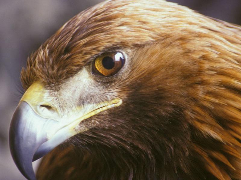 Aquila reale abner rossi blog ufficiale for Volantino acqua e sapone l aquila
